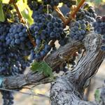 Northern Sonoma County Wine Road
